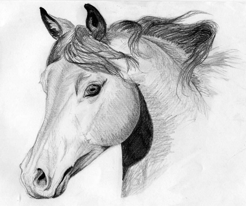 Dessin de cour de cheval - Cheval facile a dessiner ...